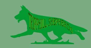 Welcome to Tripphill Shepherds
